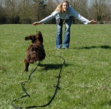 Dog Training - Teach your dog to Recall